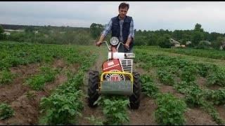 Междурядная обработка картофеля мотоблоком и вручную