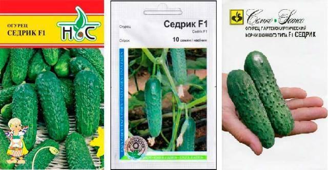 Описание сорта огурца седрик f1 его характеристика и урожайность