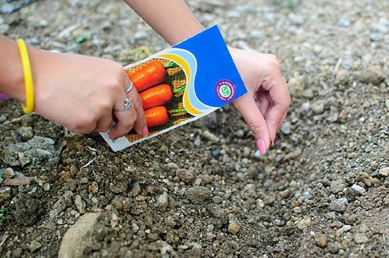 Как сажать морковь, чтобы семена обойтись без прореживания и особого ухода?