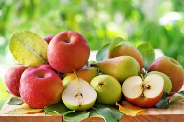 Что посадить под деревом яблони для красоты и максимальной пользы