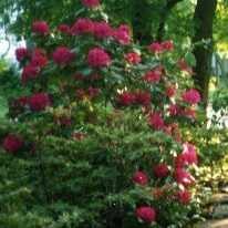 Что садить в тени: подходящие растения