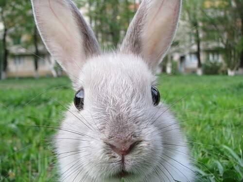 Симптомы и лечение болезней глаз у кроликов