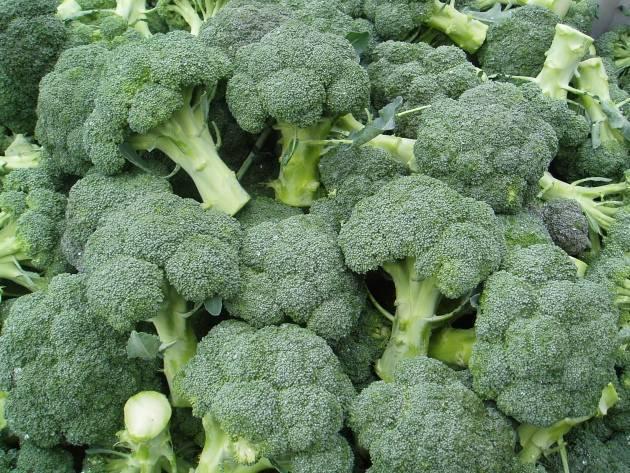 О выращивании брокколи: когда высаживать или сеять, правила ухода, агротехника
