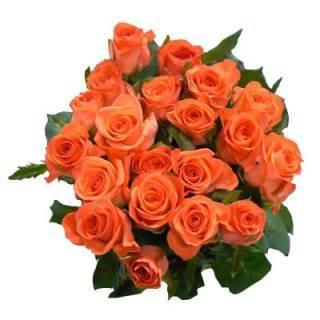 Розы кораллового цвета фото