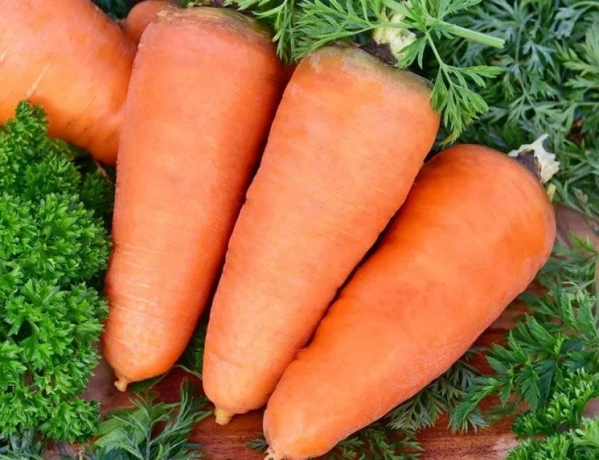 Сорт моркови шантане королевская