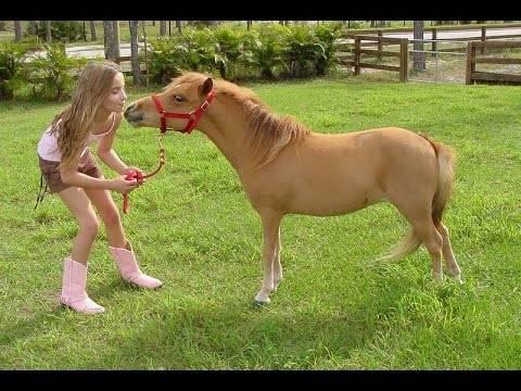 Карликовая мини-лошадь