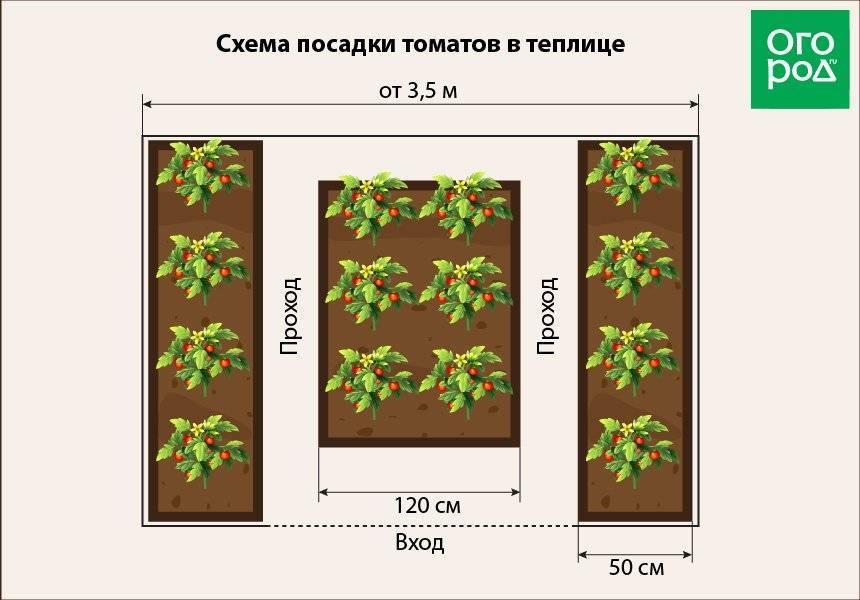 Схема размещения помидоров в теплице 3х6