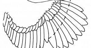 Как правильно подрезать крылья индюкам, чтобы не летали