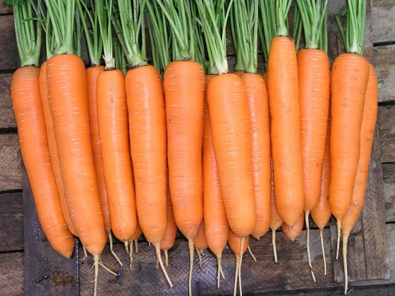 Сеялка для семян моркови — рассматриваем подробно