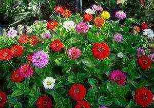 Какие цветы посадить на даче осенью, чтобы они цвели весной и летом