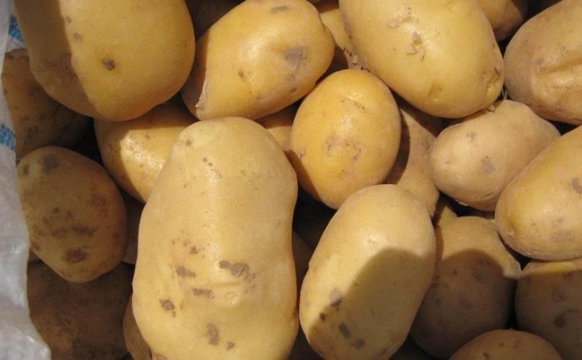 Картофель ривьера