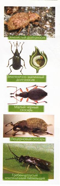 Чтобы клубника не болела: причины, симптомы заболеваний клубники и способы защиты от них