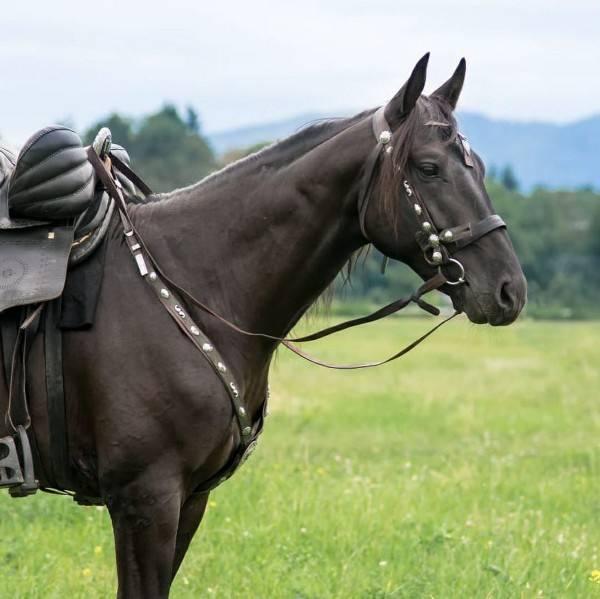 Кабардинская порода лошадей: описание, уход и содержание коней