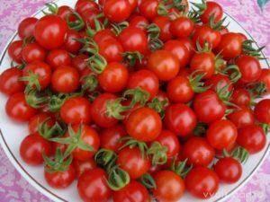 Как вырастить рассаду томатов в домашних условиях. об этом не знают огородники