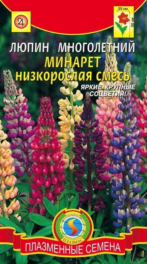 Цветок люпин многолетний: описание растения и его выращивание - энциклопедия цветов