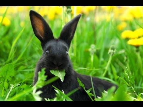 Можно ли кроликам давать рис - общая информация - 2020