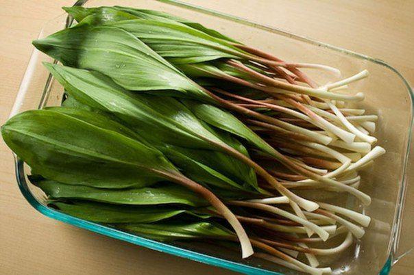 Черемша: что это за растение, фото, польза для организма человека, рецепты лечебных средств
