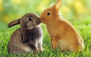 Чем отличаются кролики от зайцев — основные отличия и разница