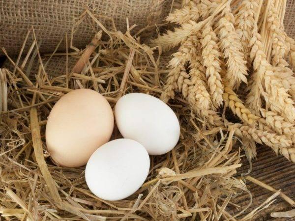 Несут ли бройлеры яйца?
