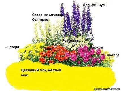Подборка схем посадки цветников из однолетников и многолетников