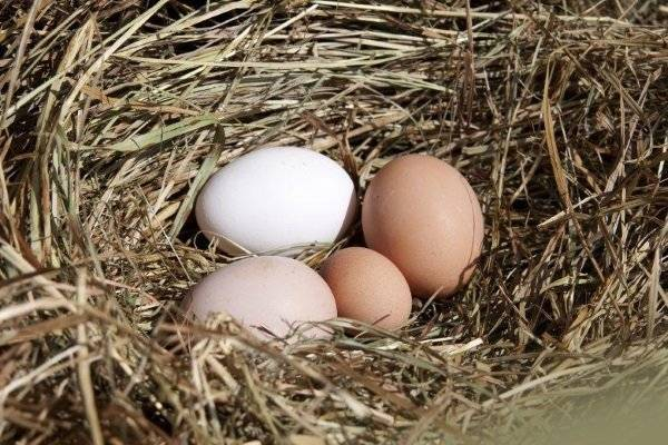 Почему куры несут мелкие яйца: причины и способы решения