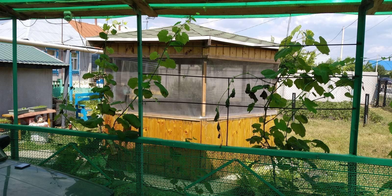 Подвязка винограда: зачем это делать, способы подвязки