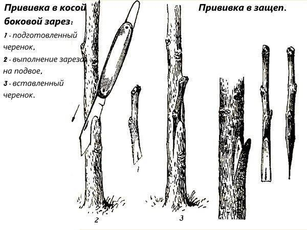 Советы по посадке плодовых деревьев и уходу за ними