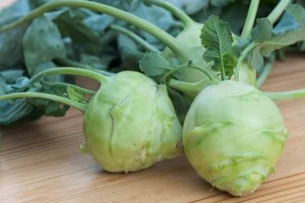 Как приготовить капусту кольраби? лучшие рецепты приготовления капусты кольраби