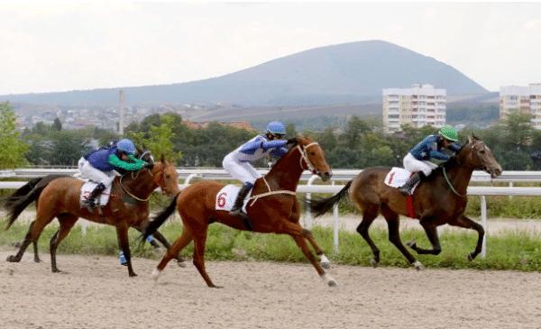 Самые уникальные лошади в мире