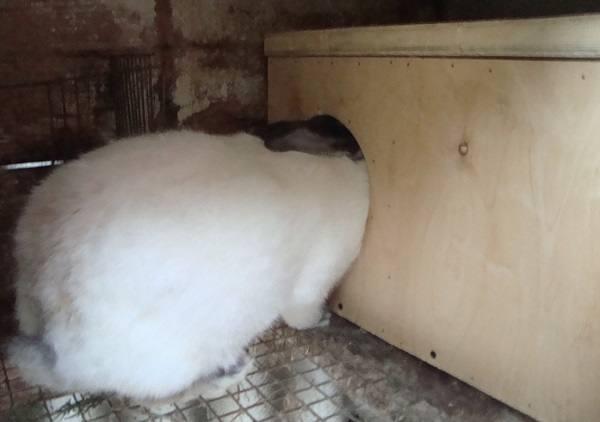 Как сделать маточник для кроликов?
