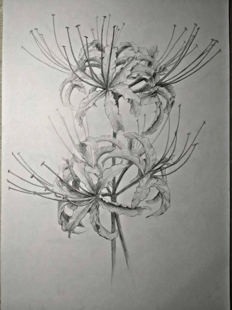 Ликорис: выращивание и уход в открытом грунте