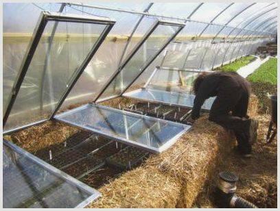 Сорта редиса для теплицы: когда сажать и как вырастить редис в теплице зимой с хорошей урожайностью?
