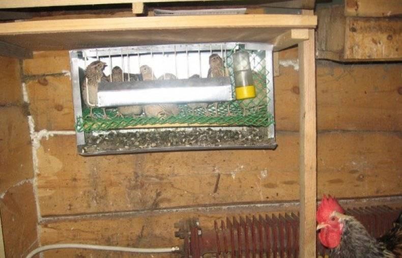 Совместное содержание кур и уток в одном помещении