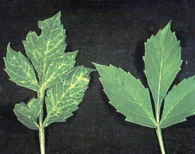 Методы борьбы с вредителями и болезнями растений