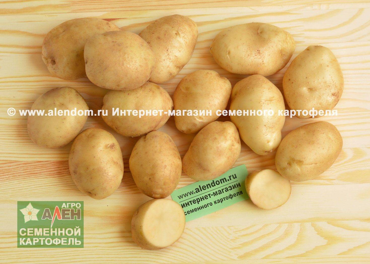 Сорт картофеля «удача»: характеристика, описание, урожайность, отзывы и фото