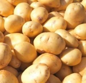 Картофель фермер: характеристика и особенности выращивания сорта