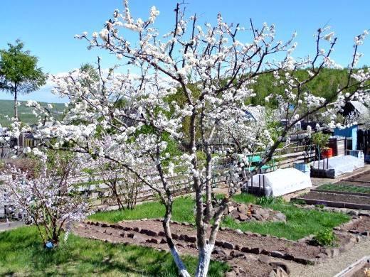 Что нужно сделать в марте 2020 года в саду и огороде?