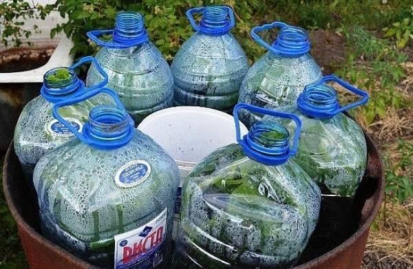 Огурцы в пластиковых пятилитровых бутылках выращивание