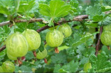 Что такое вегетационный период и как его ускорить?