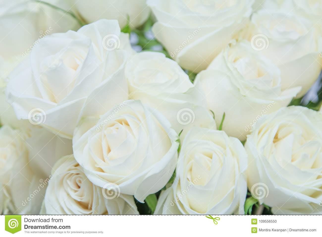 Белые розы (57 фото): особенности красивых цветов, описание лучших больших кустов роз. характеристики роз «белый медведь» и других сортов