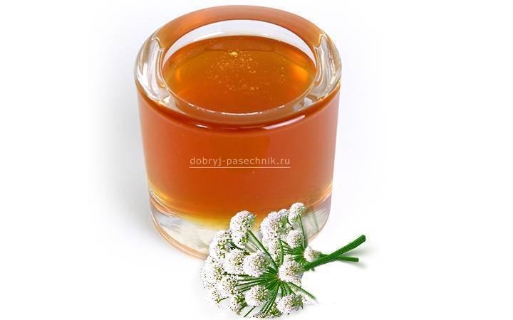 Мед из дягиля: полезные свойства, противопоказания, отзывы