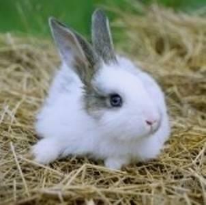 Прививки кроликам :какие и когда делать