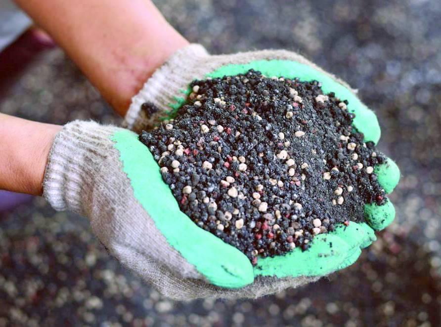 Подкормка ежевики весной: получаем 100% прекрасный урожай