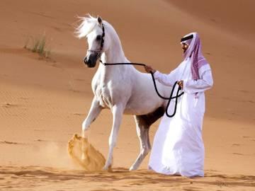 Орловская порода лошадей: характеристика, кормление и уход