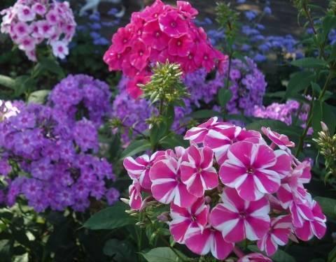 Удобрение растений в период цветения: для урожая или обильного декоративного эффекта