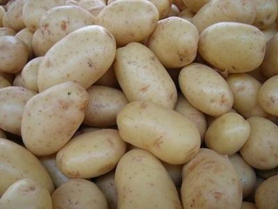 Отечественный картофель «василек»: описание сорта, характеристика, фото
