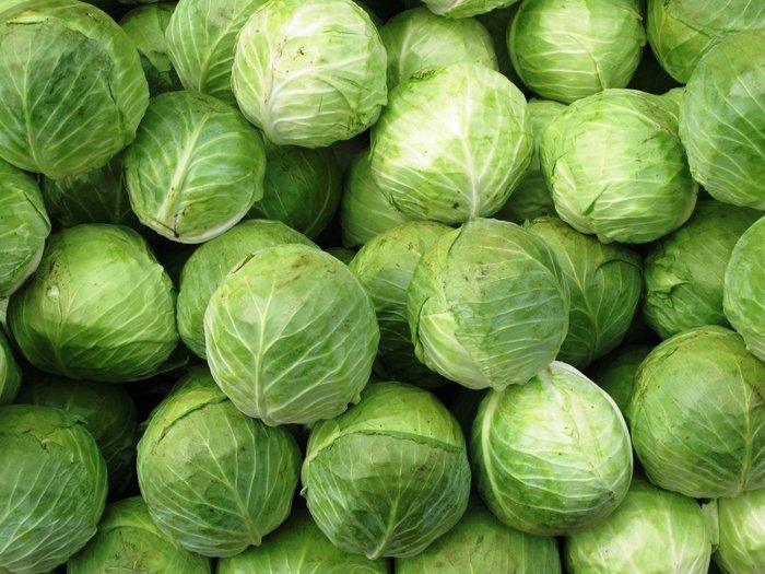 Топ 40 лучших сортов капусты белокочанной с описанием и характеристиками