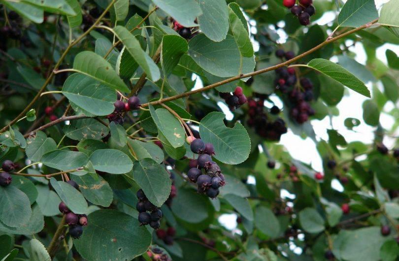 Что посадить в тени на даче – тенелюбивые цветы, овощи и деревья