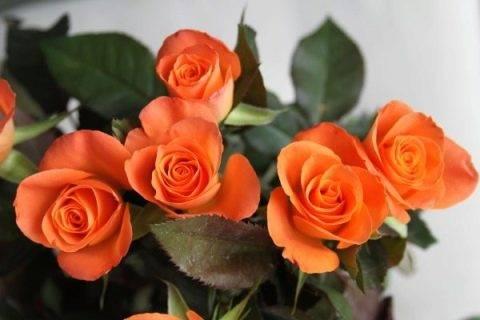 Лучшие сорта роз по цветам   о розе