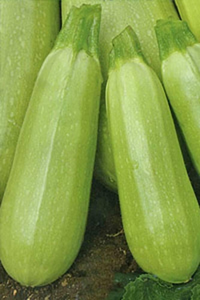Скороспелые сорта кабачков